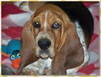 hartzellhounds002002.jpg